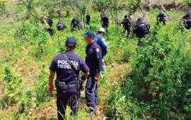 destruyen-15-plantios-de-mariguana-en-ixtlan-del-rio