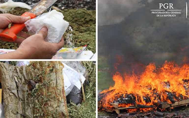 incineran-en-nayarit-184-kilos-de-drogas