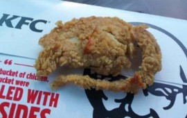pide-pollo-y-le-entregan-rata-empanizada-en-kfc