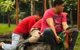 rescatistas-aprenderan-sobre-el-manejo-de-cocodrilos