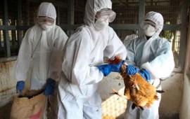 sube-precio-del-huevo-en-eu-por-epidemia-de-influenza-aviar