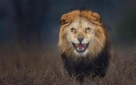 terrible-ataque-leon-mata-a-mujer-en-safari-por-llevar-la-ventanilla-abajo