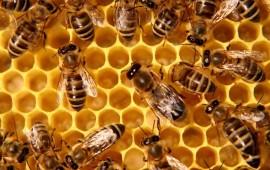 las-abejas-pueden-detectar-el-cancer-en-solo-minutos-gracias-a-un-ingenioso-artefacto