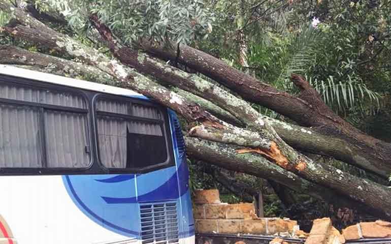 cae-arbol-de-15-metros-sobre-tres-autobuses-foraneos-en-cuernavaca