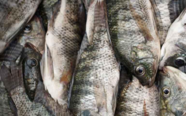 conacyt-destina-10-mdp-a-nayarit-para-impulsar-la-pesca