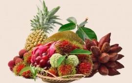 jalisco-y-nayarit-sacan-jugo-a-frutas-exoticas