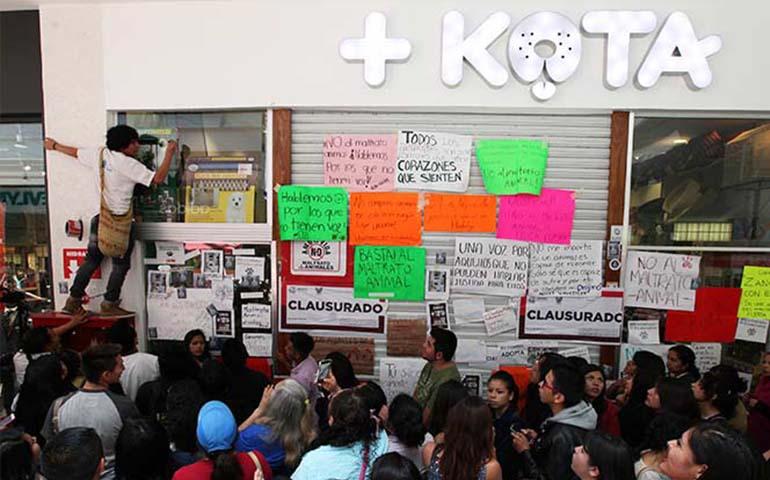 kota-anuncia-medidas-para-proteger-a-los-animales-que-vende