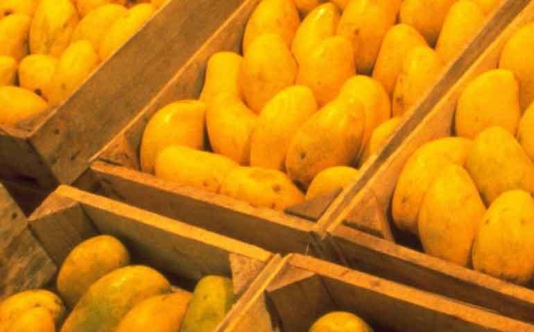 mango-se-vende-a-bajo-precio