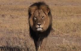 psiquica-habla-con-leon-cecil-desde-el-mas-alla