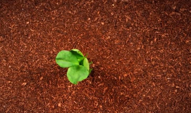 la-vida-de-una-planta-en-poco-mas-de-2-minutos