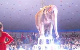 video-elefantes-ayudan-a-otro-que-cayo-en-un-circo