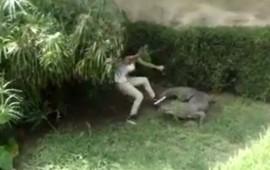video-salta-barda-de-un-zoologico-para-molestar-a-un-cocodrilo