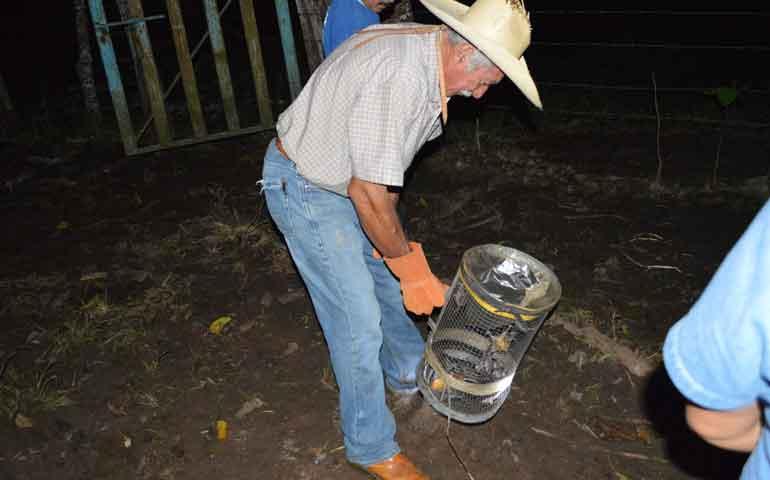 inicia-campana-de-captura-de-murcielagos-para-proteger-la-salud-del-ganado