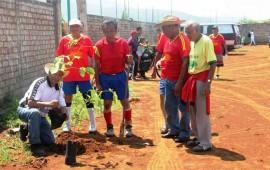 plantaron-arboles-en-la-taxistas
