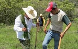 programa-de-reforestacion-registra-35-de-avance