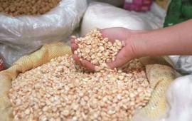 se-espera-produccion-de-190-mil-toneladas-de-maiz-blanco-en-nayarit
