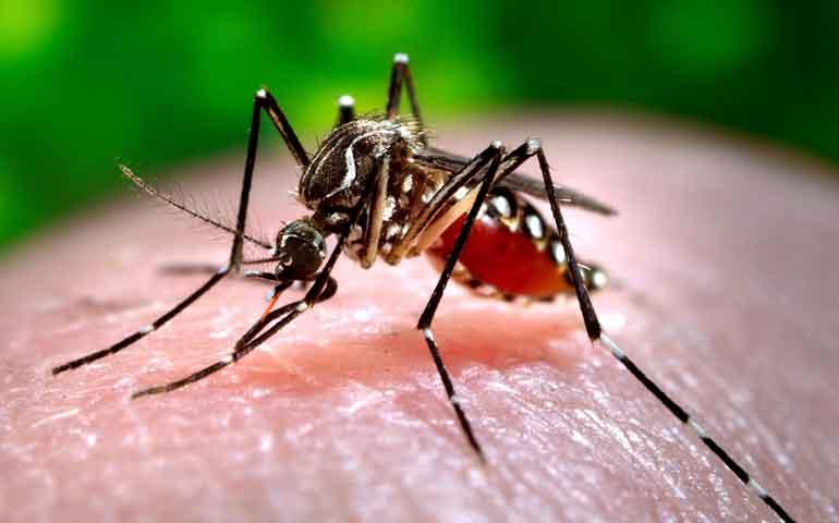 se-preve-aumento-en-casos-de-chikungunya