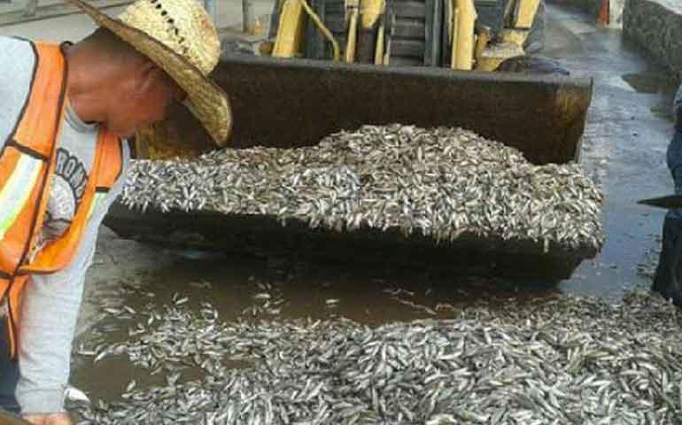toneladas-de-peces-muertos-aparecen-en-laguna-de-guadalajara