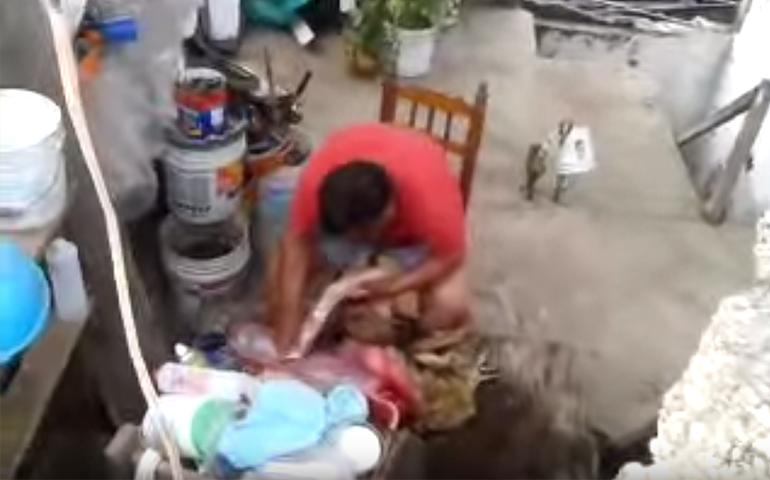video-destazaba-a-un-perro-para-tacos-y-lo-descubren