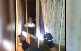 video-policias-municipales-de-aguascalientes-frustran-suicidio