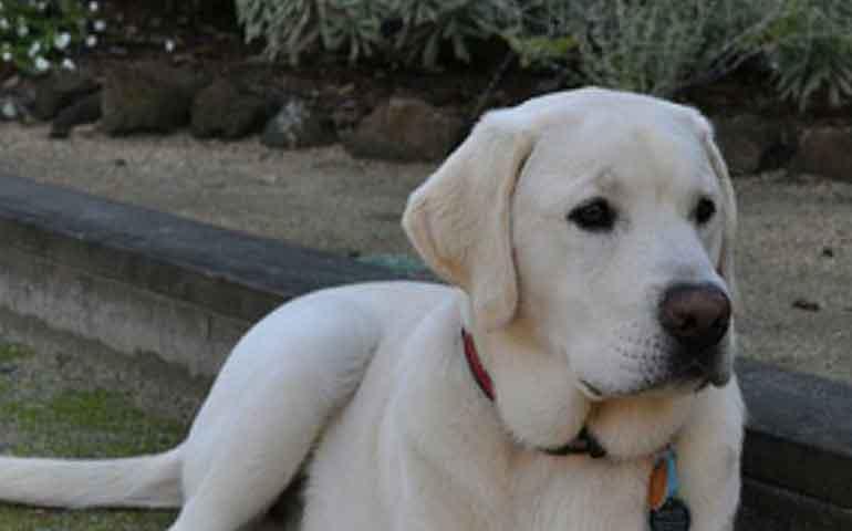 5-mejores-razas-de-perros-para-ninos-pequenos