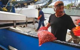 arranca-la-temporada-camaronera-en-el-golfo-de-mexico-2015-216