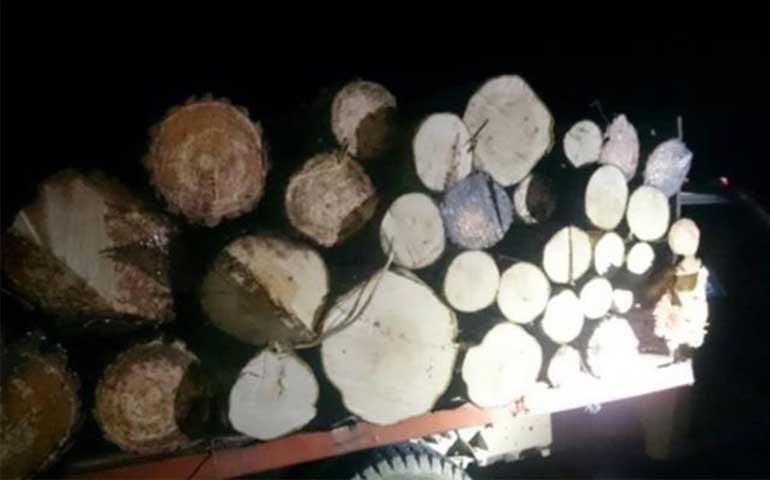 aseguran-madera-ilegal-en-nayarit-michoacan-y-veracruz