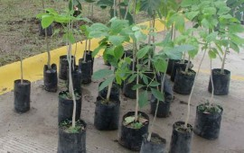 continua-la-reforestacion-en-riviera-nayarit
