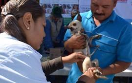 inicia-gobierno-programa-de-vacunacion-canina-y-felina