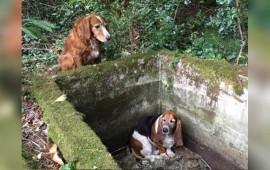 mascota-aguarda-junto-a-su-amigo-canino-hasta-ser-rescatados