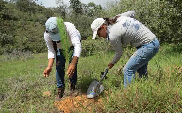 un-exito-la-reforestacion-en-nayarit-conafor