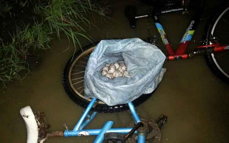 capturan-a-8-personas-por-saqueo-de-huevos-de-tortuga