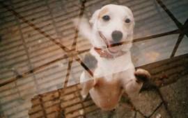 por-que-los-perros-se-ponen-felices-cuando-te-ven
