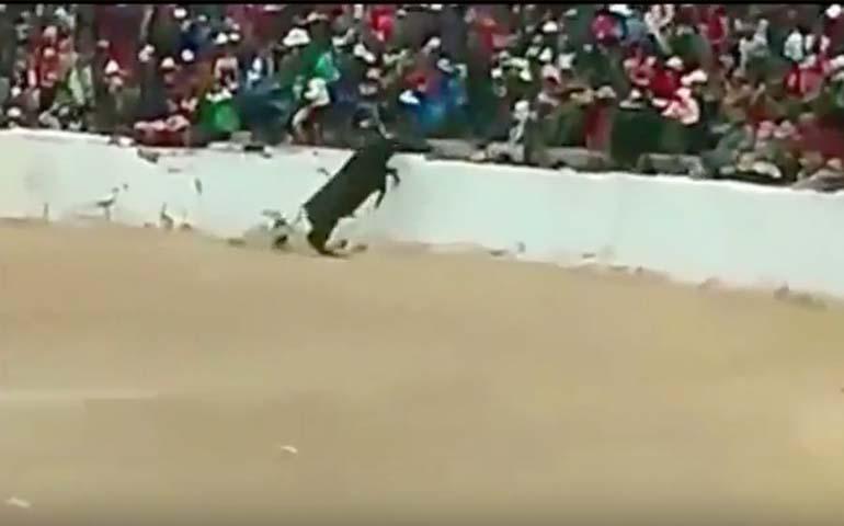 toro-salta-a-las-gradas-de-una-plaza-en-peru-dejando-a-cuatro-personas-heridas