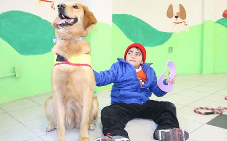 se-implementa-programa-de-terapia-con-perros-en-tepic