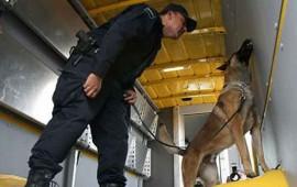 hallan-mariguana-en-camion-que-transportaba-comida-para-perro