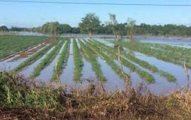 lluvias-afectan-sembradios-de-compostela