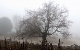 bajas-temperaturas-persistiran-en-nayarit