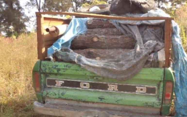 decomisa-profepa-2-metros-cubicos-de-madera-en-xalisco