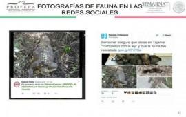 desmiente-profepa-fotos-de-cocodrilos-muertos-en-tajamar