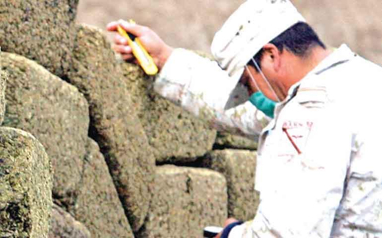 incautan-en-coahuila-2-mil-600-kilos-de-mariguana