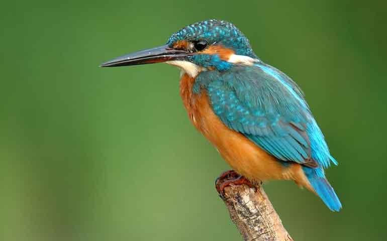 listo-el-festival-internacional-de-aves-migratorias-de-san-blas
