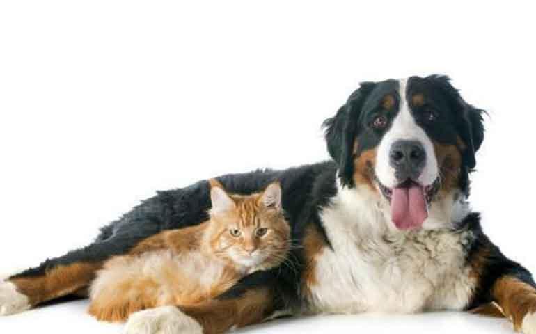 los-perros-quieren-a-sus-duenos-cinco-veces-mas-que-los-gatos