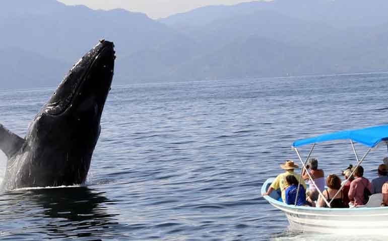semarnat-usara-redes-sociales-en-proteccion-a-ballenas