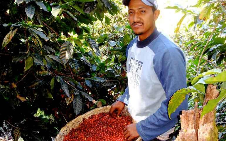 apoya-roberto-a-productores-de-cafe-a-combatir-plagas
