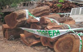 aseguran-5-mil-metros-cubicos-de-madera-en-el-nayar