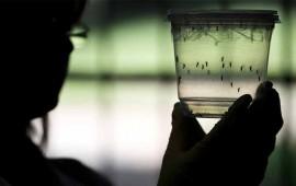 confirman-primer-caso-de-zika-en-sinaloa
