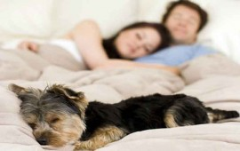 dormir-con-mascotas-podria-ser-beneficioso