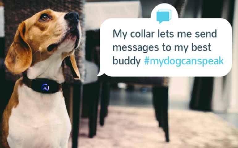 el-collar-que-le-permite-a-tu-perro-tuitear-sobre-su-dia