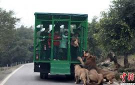el-zoologico-donde-los-animales-estan-libre-y-los-humanos-enjaulados